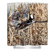 Hooded Merganser Shower Curtain