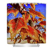 #199 Red Maple Shower Curtain