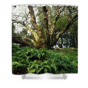 1b6339 Frens And Oaks On Our Mountain Shower Curtain