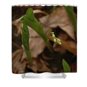 1st Lily Of Spring Shower Curtain