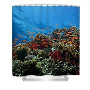 A School Of Orange Basslets Shower Curtain by Terry Moore