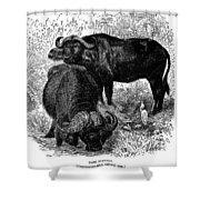African Buffalo Shower Curtain