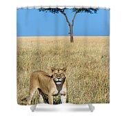 African Lioness Panthera Leo, Serengeti Shower Curtain