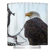 American Bald Eagle Shower Curtain