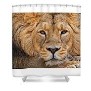 Angolian Lion Shower Curtain