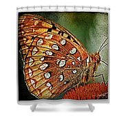 Aphrodite Fritillary 1 Shower Curtain