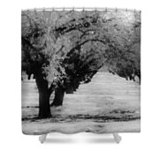 Apple Orchards In Dixon Shower Curtain