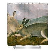 Arctic Hare Shower Curtain