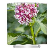 Asclepias Flower Shower Curtain