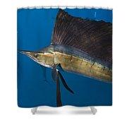 Atlantic Sailfish Istiophorus Albicans Shower Curtain