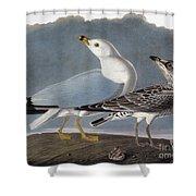Audubon: Gull Shower Curtain