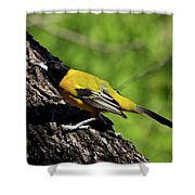 Audubon Oriole Shower Curtain