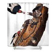 Audubon: Woodpecker Shower Curtain