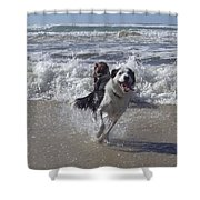 Australia - Border Collie Runs Out Of The Surf Shower Curtain