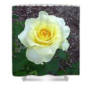 Australia - Yellow Rose Flower Shower Curtain