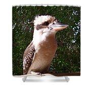 Australia - Kookaburra Full Body Look Shower Curtain
