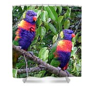 Australia - Two Brightly Coloured Lorikeets Shower Curtain