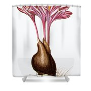 Autumn Crocus Shower Curtain