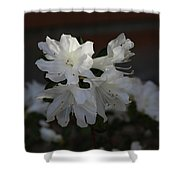 Azalea Flowers Shower Curtain
