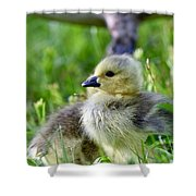 Baby Goose Chick Shower Curtain