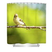Baby Sparrow Shower Curtain