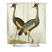 Balearica Regulorum Grey Crowned Crane, Robert Jacob Gordon, 1777 - 1786 Shower Curtain