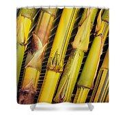 Bamboo Stalks Shower Curtain