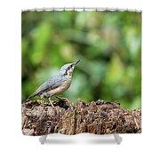 Beautiful Nuthatch Bird Sitta Sittidae On Tree Stump In Forest L Shower Curtain