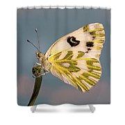 Becker's White Butterfly Shower Curtain