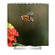 Bee, Bumblebee, Flying To A Flower, In Marseille, France Shower Curtain