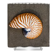 Bellybutton Nautilus - Nautilus Macromphalus Shower Curtain