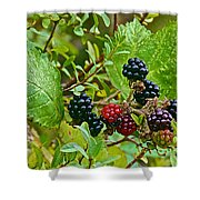 Berries In Vicente Perez Rosales National Park Near Puerto Montt-chile  Shower Curtain