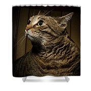 Big Cat On Chair Shower Curtain