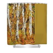 Birch Trees In Autumn Shower Curtain