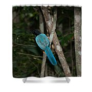 Birds From Coba Shower Curtain