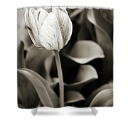 Black And White Tulip Shower Curtain