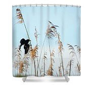 Black Bird In Cat Tails Shower Curtain