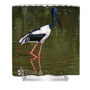 Black-necked Stork Shower Curtain