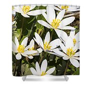 Bloodroot Flowers 2 Shower Curtain