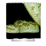Blotched Palm Pitviper Shower Curtain