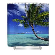 Bora Bora, Palm Tree Shower Curtain