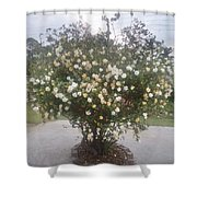 Bordoloi Shower Curtain