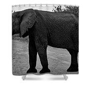 Botswana Shower Curtain