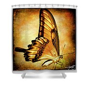 Broad Banded Swallowtail Shower Curtain