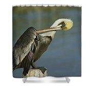 Brown Pelican At The Dock Of The Bay Shower Curtain