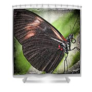 Brush-footed Butterfly Shower Curtain
