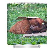 Budapest Zoo Shower Curtain