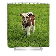 Calf In A Pasture Shower Curtain