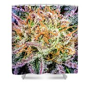 Cannabis Varieties Shower Curtain