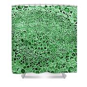 Celery Stalk, Sem Shower Curtain